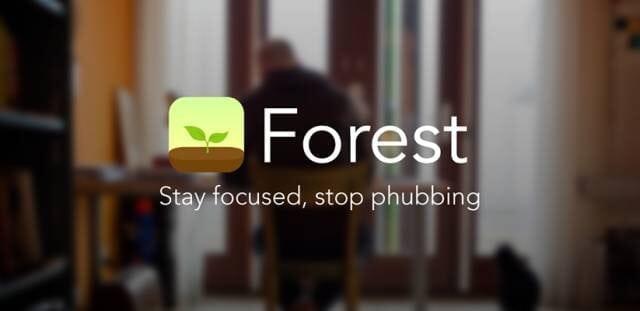 论文代写 Forest